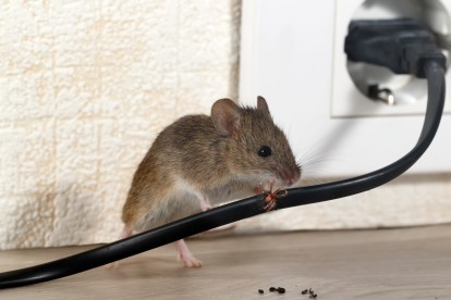 Pest Control in Borehamwood, Elstree, Well End, WD6. Call Now! 020 8166 9746