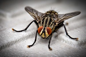 Insect Control, Pest Control in Borehamwood, Elstree, Well End, WD6. Call Now 020 8166 9746