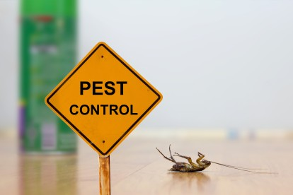 Pest Contol in Borehamwood, Elstree, Well End, WD6. Call Now 020 8166 9746