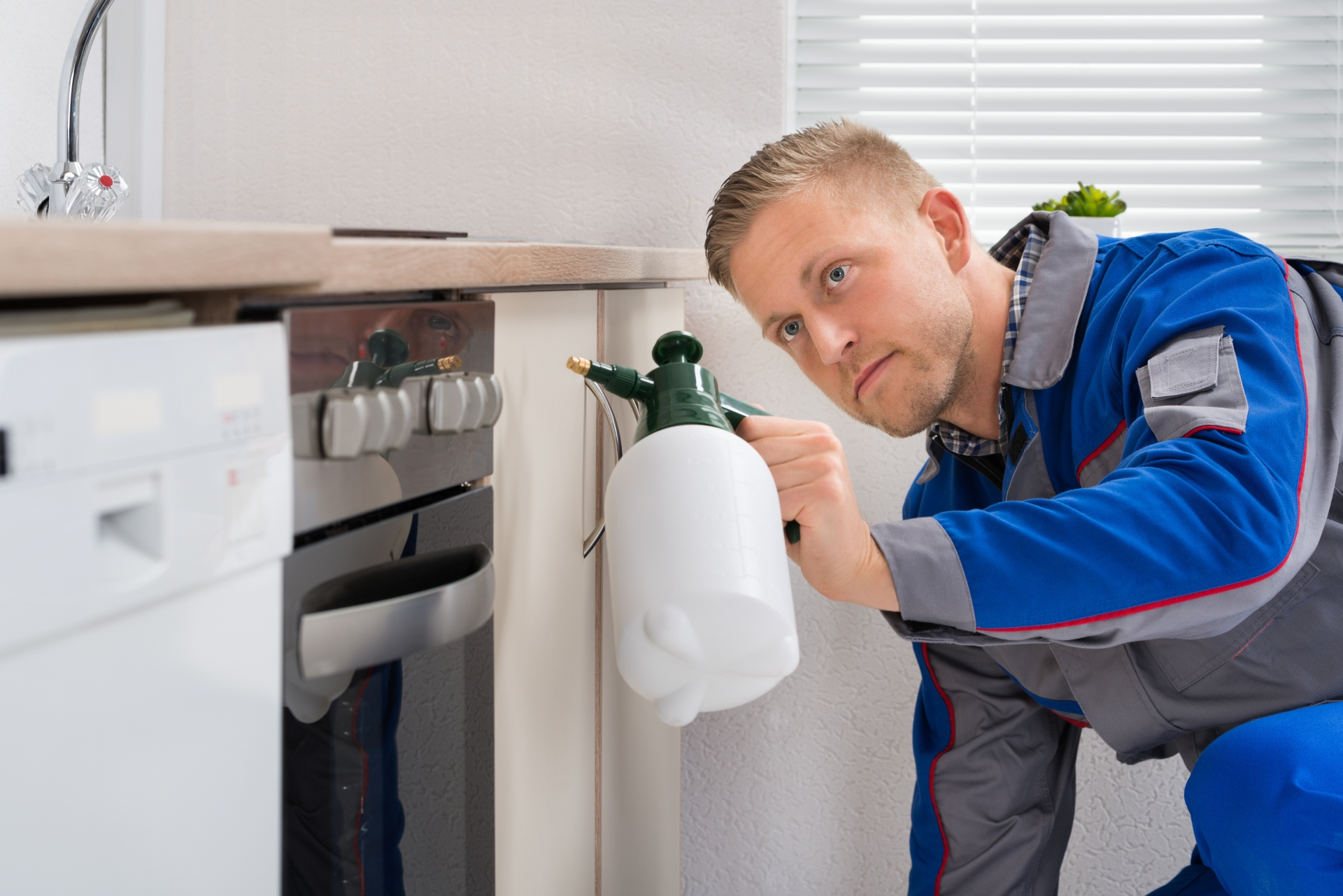 Pest Inspection, Pest Control in Borehamwood, Elstree, Well End, WD6. Call Now 020 8166 9746